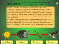 food_chains1