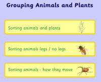grouping_plants_and_animals